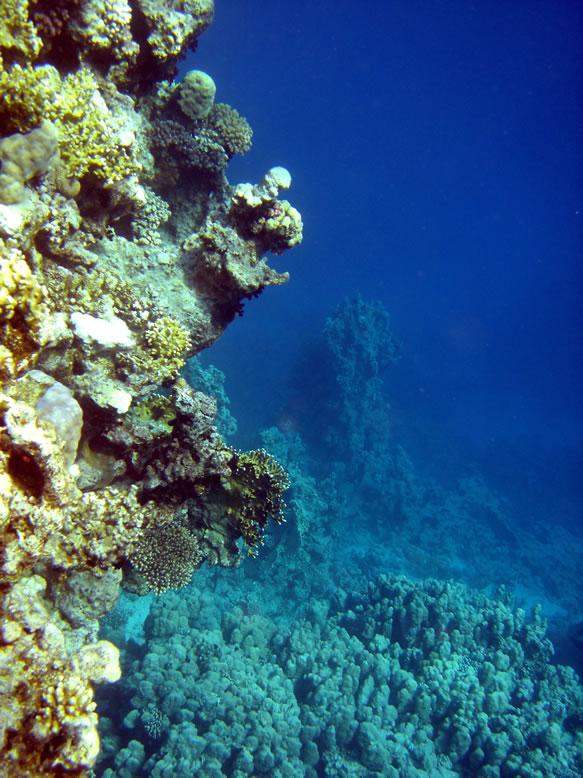 Red Sea Aquarien  Meerwasseraquarium Shop Riffgrotte